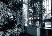 Green wall in the Howard Peters Rawlings Conservatory, in Druid — Stock Photo