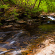 Stock Photo: Stream in Ricketts Glen State Park, Pennsylvania.