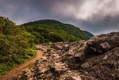 The Appalachian Trail, on Little Stony Man Cliffs in Shenandoah — Stock Photo