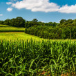 Cornfield and rollings hills in Southern York County, Pennsylvan — Stock Photo
