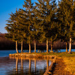 Pine trees along Pinchot Lake in Gifford Pinchot State Park, in  — Stock Photo
