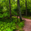 Ferns and trees on a trail in Shenandoah National Park, Virginia — Stock Photo