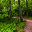 Stock Photo: Ferns and trees on trail in Shenandoah National Park, Virginia