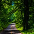 Looking down a country road through a forest in Southern York Co — Stock Photo