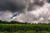 Dark storm moln över ett majsfält i södra york county, pa. — Stockfoto