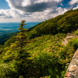 Stone wall and pine tree at overlook on Skyline Drive in Shenand — Stock Photo