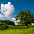 Beautiful partly-cloudy summer sky over trees and farm fields in — Stock Photo