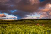 Nuvole di tramonto sopra cervi e felci in grandi prati, shenandoah nat — Foto Stock