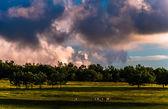 木や大きな草原の道のハイカー夕焼け雲 s — ストック写真