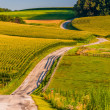 Country road and farm fields on a large hill in rural York Count — Stock Photo