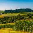 Stock Photo: Cornfield and views of rolling hills and farms in Southern York