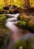 Cascades south river, parco nazionale di shenandoah, virginia. — Foto Stock