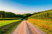 Corn fields along a dirt road in rural York County, Pennsylvania — Stock Photo