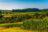 Cornfield and views of rolling hills and farms in Southern York — Stockfoto