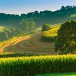 Farm fields and tree on a hillside in rural York County, Pennsyl — Stock Photo #28530535