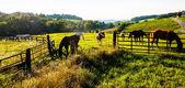 Horses and fences in a farm field in York County, Pennsylvania. — Stok fotoğraf