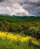 Vår syn på appalachians från skyline drive i shenandoa — Stockfoto