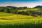 Sädesfälten och en lada på landsbygden york county, pennsylvania — Stockfoto