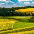 Corn fields and rolling hills in rural York County, Pennsylvania — Stock Photo #29293975