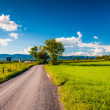 Dirt country road through farmland in the Shenandoah Valley, Vir — Stock Photo #29573711
