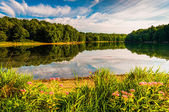 Flowers along the shore of Lake Marburg in Codorus State Park, P — Stock Photo