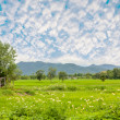Ricefield — Stock Photo #30174803