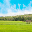 Ricefield — Stock Photo #30174809
