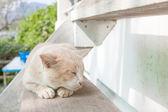 Sleepy cat — Stock Photo