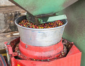 Coffee pulping — Stock Photo