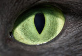 Cat eye — Stock Photo