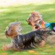 Running dog — Stock Photo #29269565
