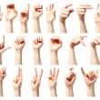 Stock Photo: Americsign language alphabet