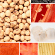 Food and Ingredients — Stock Photo