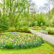 Spring garden with blooming flowers and trees — Stock fotografie