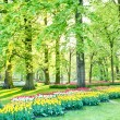 Sunny Dutch park with tulips and trees — Stock fotografie