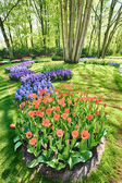 Outdoor garden with blooming tulips and hyacinths — Stock Photo