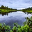 Beautiful forest and lake in Rendalen Norway — Stock Photo