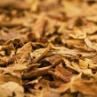 Stock Photo: Tobacco Leafs