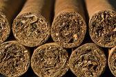 Exclusive Cigars — Stock Photo