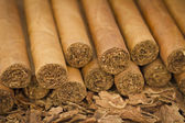 Cigars on Tobacco — Stock Photo