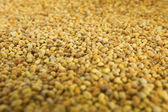 Raw Organic Bee Pollen — Stock Photo