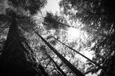 Tree tops an the Sun in the forest — Stock Photo