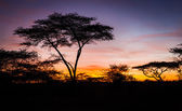 Beautiful sunrise in Serengeti — Stock Photo