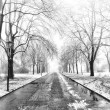 Park in winter time — Stock Photo