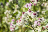 Färgglada blommor i grönt fält — Stockfoto
