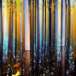 Blurry forest — Photo
