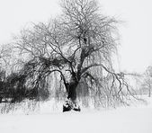 Tree in winter time — Photo