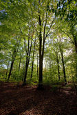 Green forest in spring time — Stock Photo