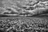 Einsamer mann zu fuß in den park — Stockfoto