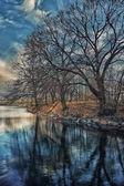 árboles en el parque — Foto de Stock
